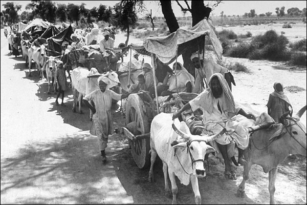 Rural Sikhs in a long ox-cart train heading towards India. Margaret Bourke-White. 1947.