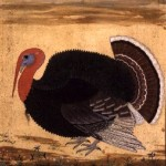 The Mughal Emperor Jahangir's now famous turkey. Brought from Goa in 1612, from the Wantage Album, Mughal, c.1612 (gouache on paper) by Mansur (Ustad Mansur) (fl.c.1590-1630) gouache on paper Victoria & Albert Museum, London, UK Indian, out of copyright