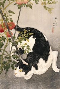 Takahashi Hiroaki (Shotei), Published by Fusui Gabo Cat Prowling Around a Staked Tomato Plant, 1931 Woodblock print, 20 7/8 x 13 7/8 in. The Museum of Fine Arts Houston, Gift of Stephanie Hamilton in memory of Leslie A. Hamilton