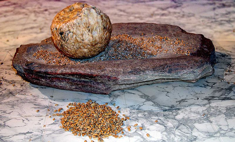 Neolithic grind stone with ancient grain seeds. Photo: José-Manuel Benito