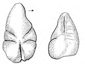 Drawing of stone statuette from two angles.