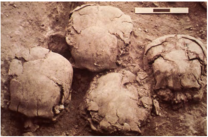 The tops of 4 skulls at excavation site.