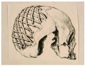 Drawing showing the evenly spaced horizontal stripes made of the black mix overlapped with diagonal lines to form a net pattern over the back of the cranium.