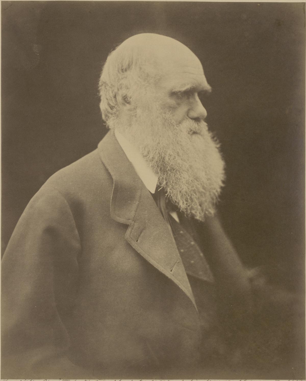 Julia Margaret Cameron (British, 1815–1879), Ch. Darwin, 1868. Albumen print, 28.5 x 22.7 cm. Gernsheim Collection, Harry Ransom Center.