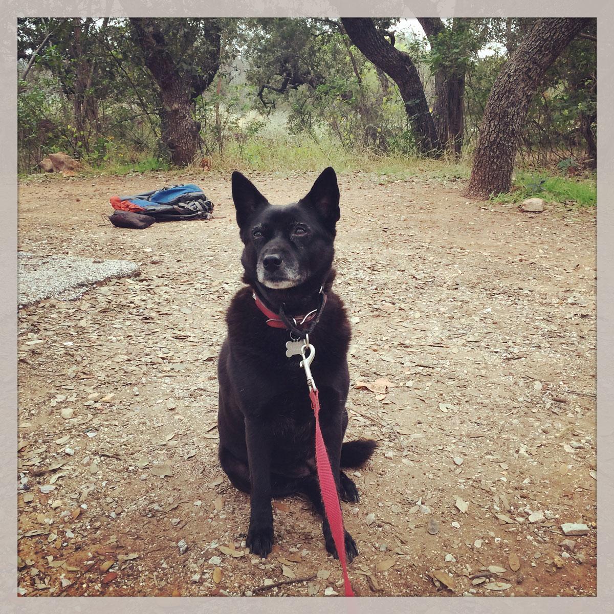 Daniela Lozano's dog, Nico, at Inks Lake State Park, December 2014. Photo by Daniela Lozano. Perro de Daniela Lozano, en Inks Lake State Park, diciembre 2014. Fotografía por Daniela Lozano.