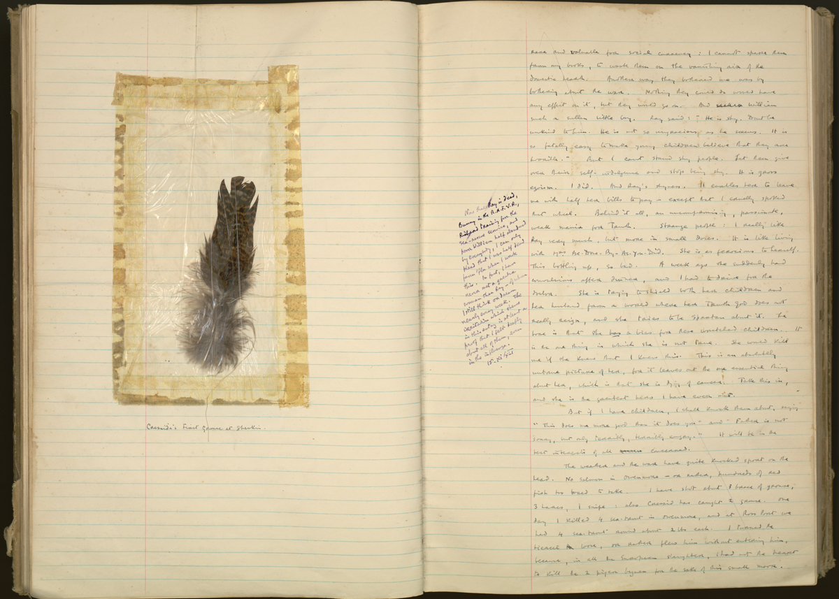 Pages from White's 1939-1941 journal, with a feather from the first grouse killed by White's hawk, Cressida.