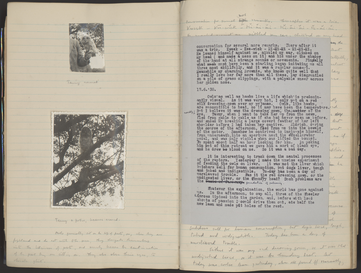 Journal pages with photographs of White's owl Tawny, and inspiration for Merlin's talking owl Archimedes in White's Arthurian sequence, The Once and Future King (17 June, 1938).