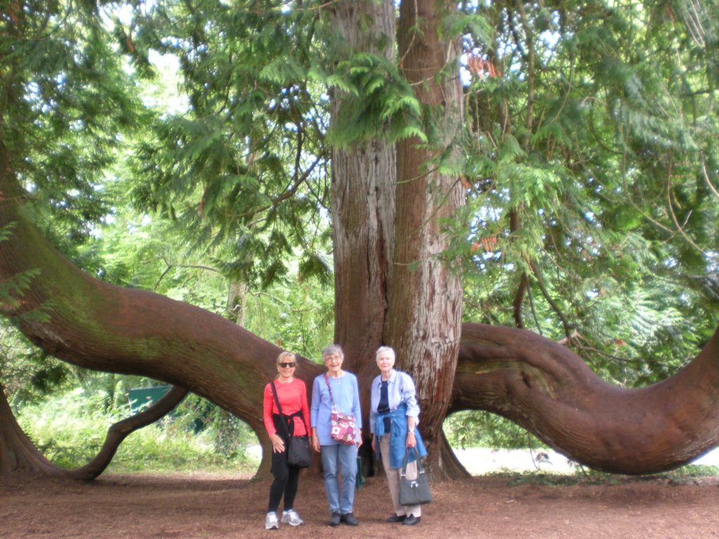 Suzanne, Diane, Anne in front of a Western Red Cedar Tree
