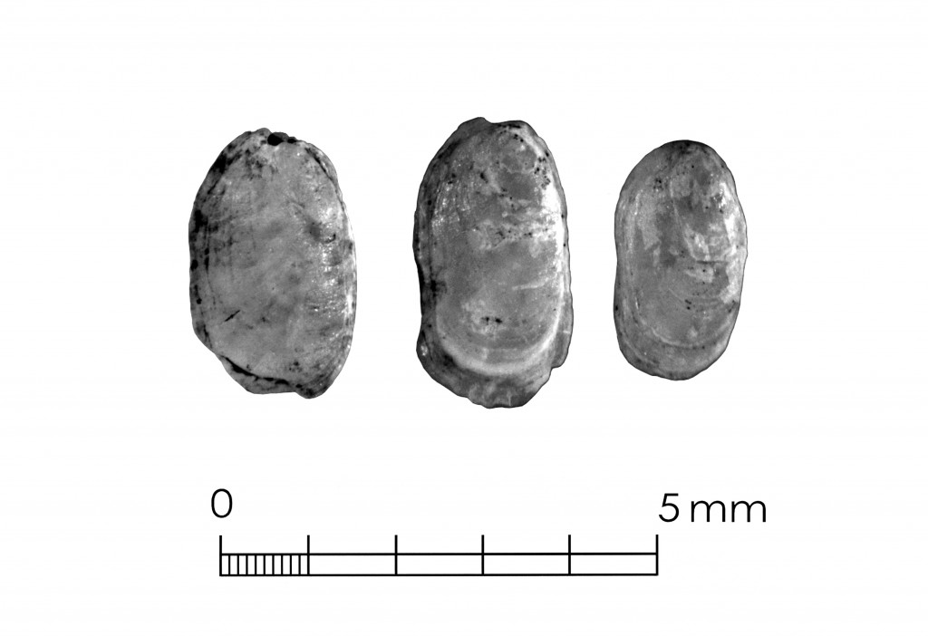 Three slug plates recovered from Late Holocene deposits at the Fish Creek Slough site, Dallas County. Note the laminations and the slight thickening at the upper end of each.