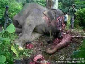 Beheaded Elephant in Yunnan Province