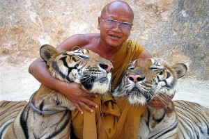 tiger-temple-thailand-29822