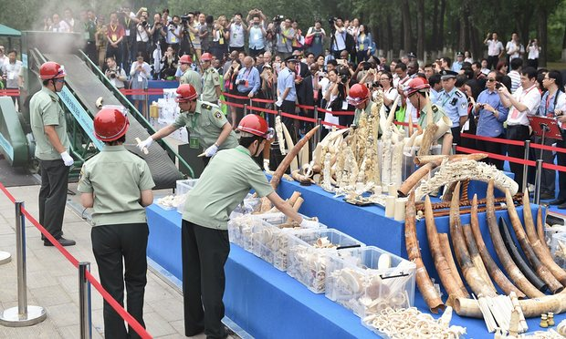 The Chinese government crushes more than a ton of ivory in May 2015. Source: The Guardian