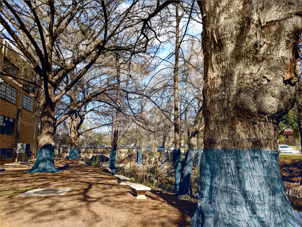 Flood plain tree banding