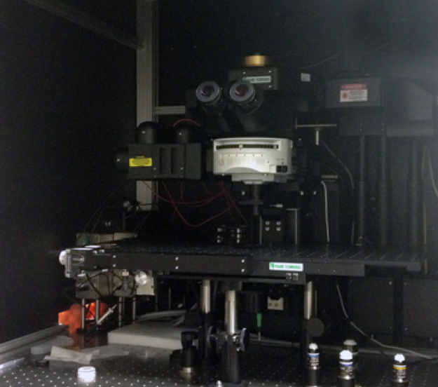 2-photon microscope