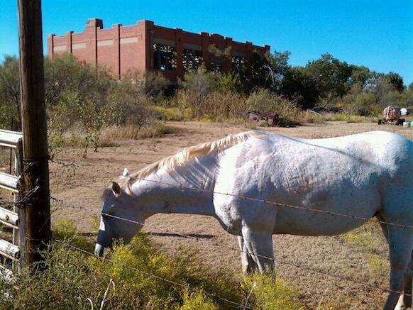 White Horse Near Abandoned Schoolhouse