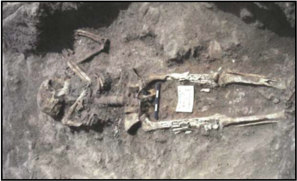 Archeological dig exposed skeleton with measure for scale