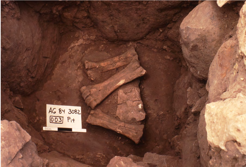 Photo of bones in archeological excavation.