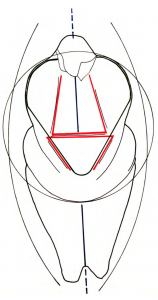 Drawing emphasizing the vertical axis with the womb bursting out in the center, at the focal point of the figurine.