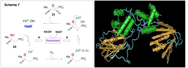 (S)-2-Hydroxypropylphosphonic Acid Epoxidase (HppE), Scheme 7, Fig 2