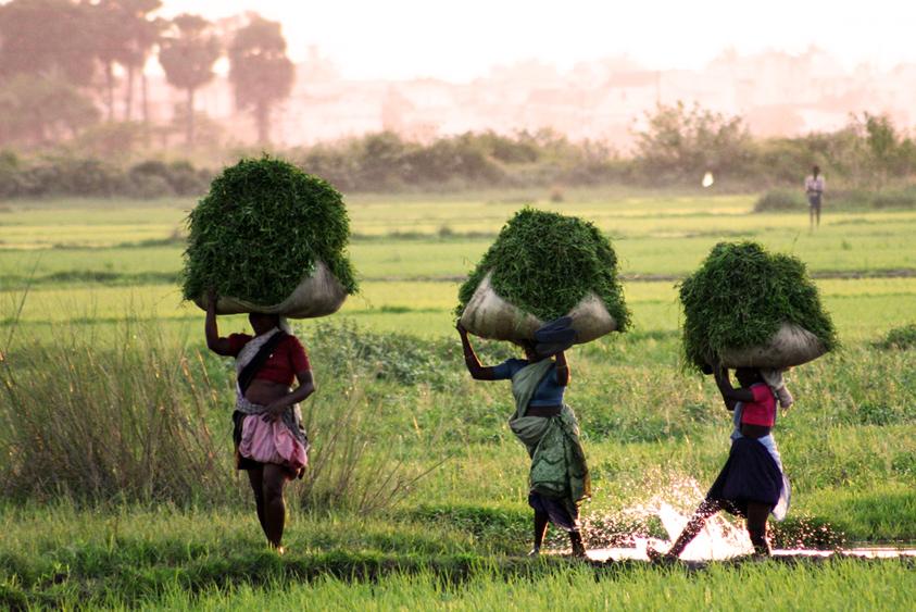 INDIA_(F)_0509_-_Esportazioni_riso