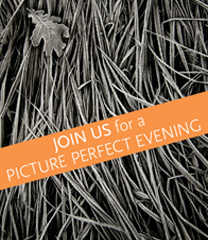 Become a member to enjoy access to exclusive events this fall