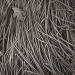 "Hans Hammarskiöld, ""Frosty Grass,"" 1952. © Hans Hammarskiöld."