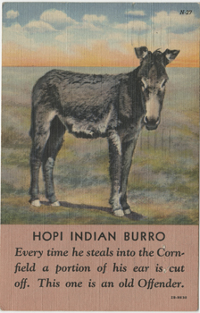 Front of postcard featuring an image of a burro from Tennessee Williams to Audrey Wood, postmarked December 20, 1943. Copyright ©2011 by the University of the South. Reprinted by permission of Georges Borchardt, Inc. All rights reserved.