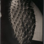"""Robb Kendrick. """"Untitled: Opuntia series,"""" July 2008. """"This image was made in San Miguel de Allende, Mexico, at my home. I have worked on a series of cacti pad specimen shots, and the series refers to the Latin name for spined cacti."""""""