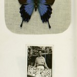 Above: A Blue Morpho butterfly specimen. Below: Belbenoit with his butterfly collection, which he caught and sold for subsistence money in Central America.