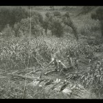 "James (Jimmy) H. Hare ""Men carrying wood to a pyre in the fields near Lioyang where five dead are laid out,"" ca. 1904–1905. Lantern slide."