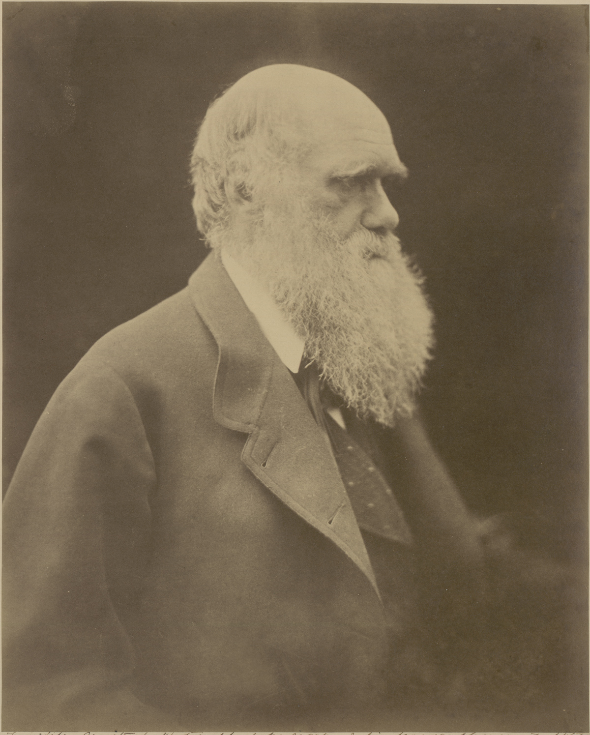 Julia Margaret Cameron (British, 1815–1879), Ch. Darwin, 1868. Albumen print, 28.5 x 22.7 cm. Gernsheim Collection, Harry Ransom Center.