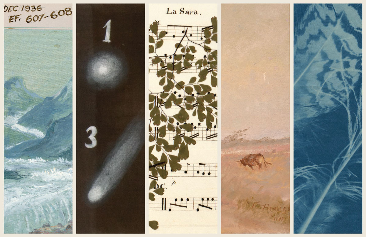 Norman O. Dawn, special effects card for Call of the Yukon, 1926; J. W. F. Herschel, Halley's Comet, 1836–7; Page from commonplace book owned by Edith May Southey Warter, undated; Frank Reaugh, Windy Day, painting: oil on canvas, 1900; Anna Atkins, Peacock Feathers, cyanotype, 1845.