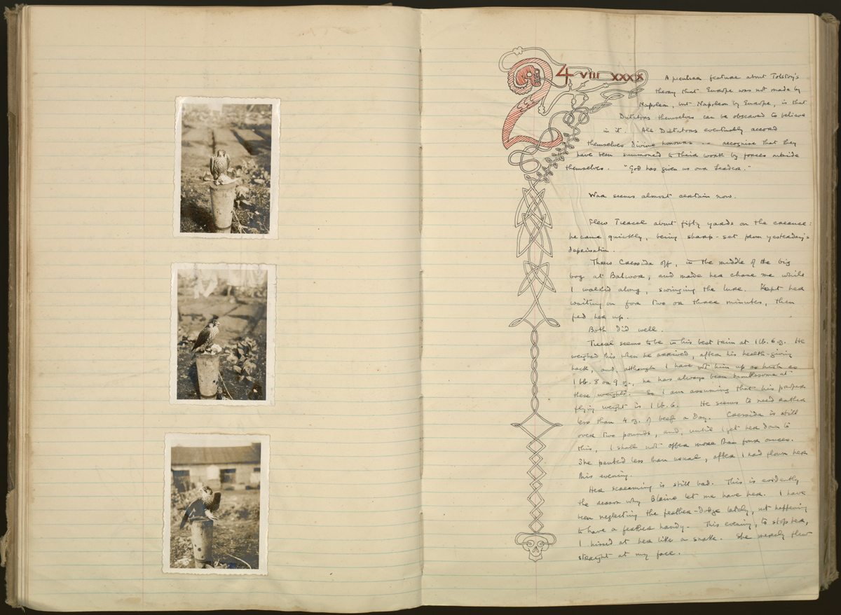 Illustrated pages from White's journal, with photographs of two hawks: Cressida, who was given to White by the famous falconer Sir Gilbert Blaine, and an unnamed tiercel (male) hawk (1940).