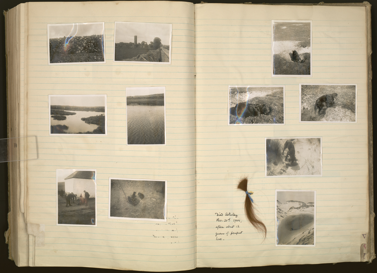 Pages from one of White's extensive journals, featuring photographs of rural Ireland and a lock of hair from White's deceased Irish Setter, Brownie (25 November, 1944).