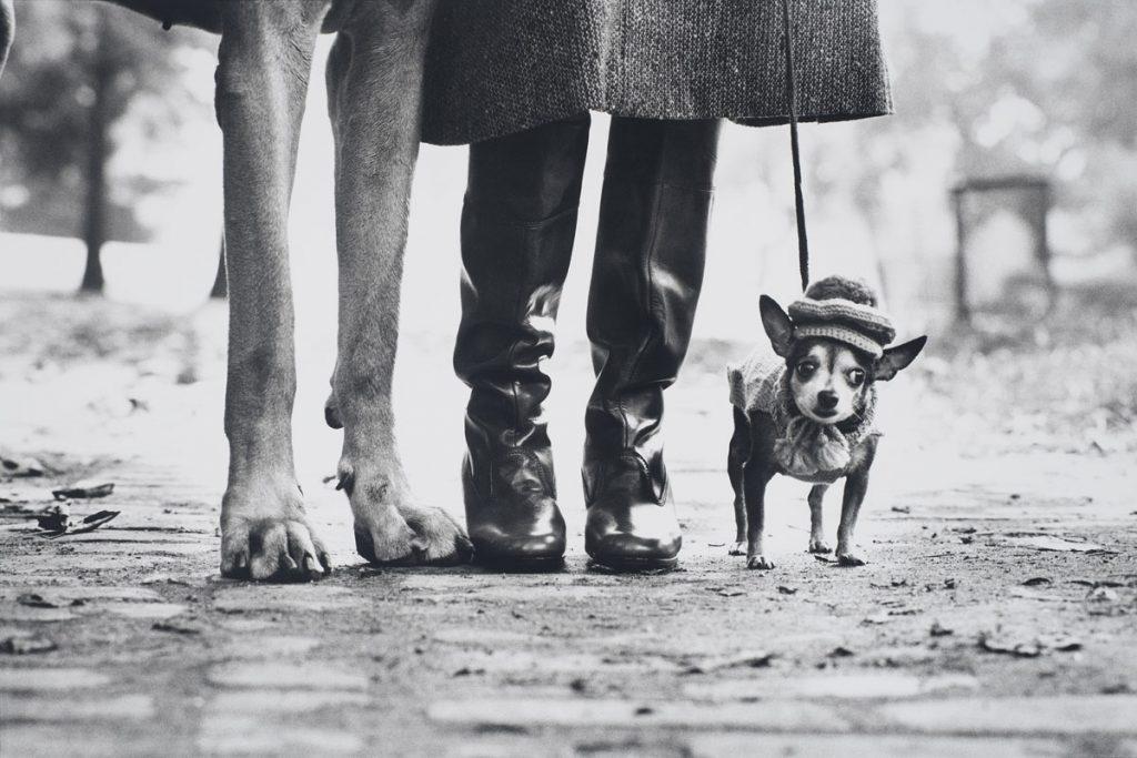 Elliott Erwitt (American, b. France 1928), New York, New York, 1974. Gelatin silver print, 30.0 x 44.7 cm (image). Harry Ransom Center Collection © Elliott Erwitt/Magnum Photos