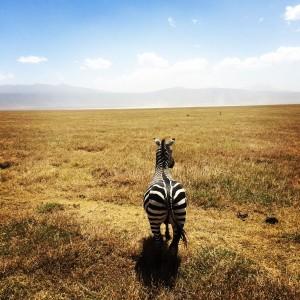 Photo taken by: Me! - Ngorogoro Crater, Tanzania
