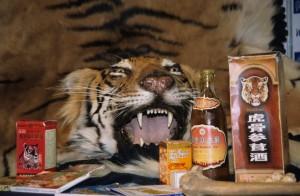Tiger_medicines_reduced.5